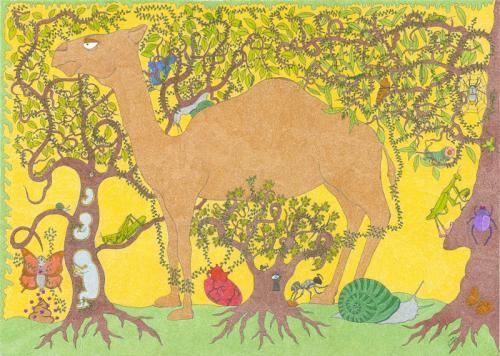 La Foresta del Secco e dell'Umido